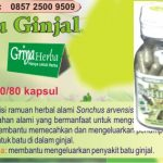 HERBAL BATU GINJAL