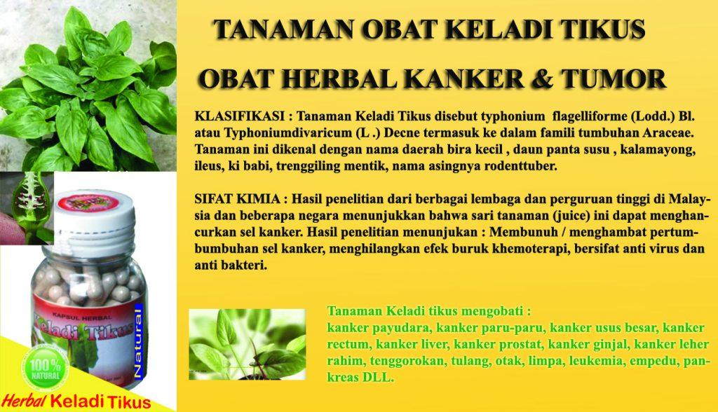 pengobatan herbal kanker