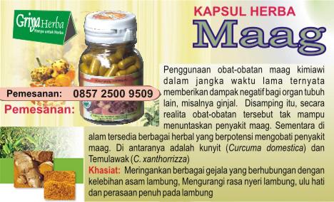 pengobatan herbal penyakit maag