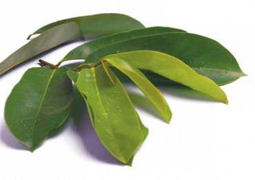 daun sirsak obat herbal kanker