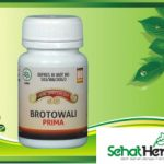 Obat Herbal Brotowali