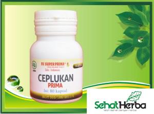 obat herbal ciplukan