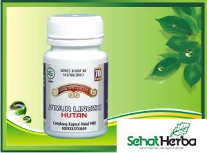 obat herbal jamur lingzhi hutan