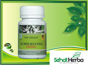 obat herbal kapsul tanaman kumis kucing