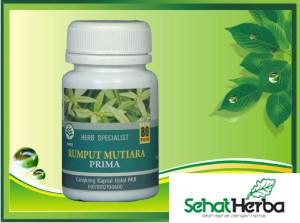 obat herbal rumput mutiara