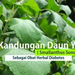 Obat Herbal Diabetes Daun Yakon