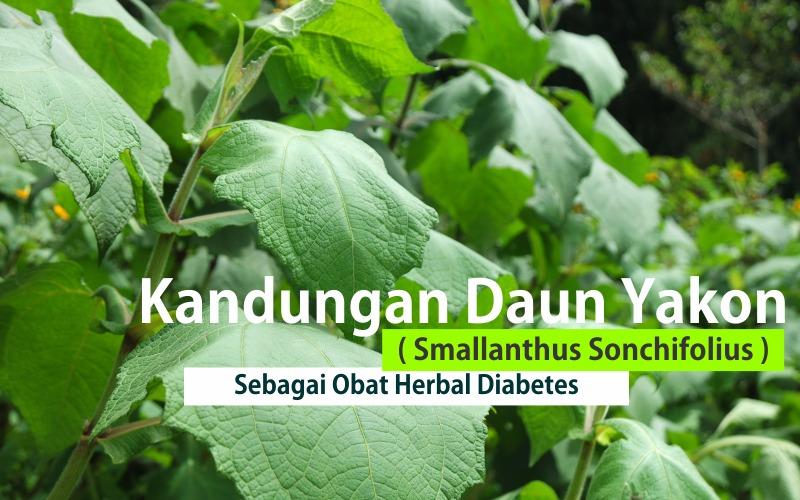 herbal daun yakon